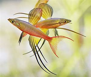 Die Besten Aquarien : die besten 25 fisch tankwand ideen auf pinterest ~ Lizthompson.info Haus und Dekorationen