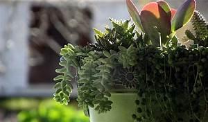 Plante Tropicale D Intérieur : les plantes d 39 int rieur lumi re et humidit botanix ~ Melissatoandfro.com Idées de Décoration