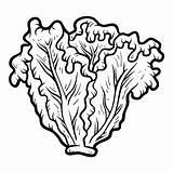 Lettuce Coloring Clipart Clip Colorir Laitue Coloriage Lattuga Alface Malbuch Libro Vector Colorare Kopfsalat Worksheet Children Colorear Lechuga Livro Livre sketch template