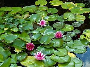 inkspired musin... White Water Lily Quotes
