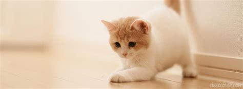 Cute Cat Facebook Cover