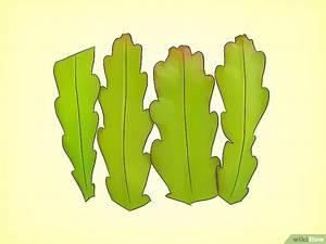 Comment Entretenir Un Cactus : comment faire pousser un cactus epiphyllum 18 tapes ~ Nature-et-papiers.com Idées de Décoration