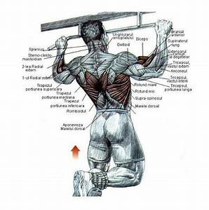 exercitii biceps triceps