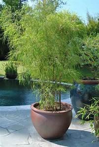 Plante D Extérieur En Pot : les 25 meilleures id es concernant plantes en pot sur pinterest patio de plantes en pots ~ Teatrodelosmanantiales.com Idées de Décoration