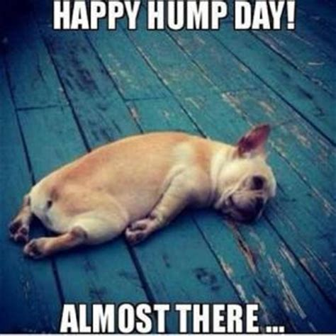 Dirty Hump Day Memes - hump day work meme happy hump day almost there picsmine