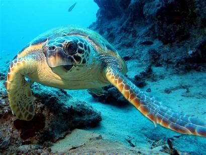 Ocean Scene Scenes Under Wallpapers Wallpapersafari Which