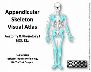 Appendicular Skeleton Visual Guide