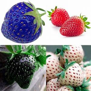 100pcs Red Blue Black Strawberry Climbing Strawberry Seeds ...