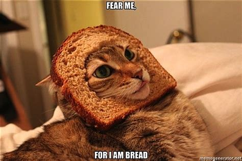 Cat Breading Meme - the breading cats meme is still a thing apparently photos