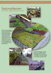 Extensive Dachbegrünung Pflanzen : bepflanzung gr nd chern flachd cher mit sedum pflanzen ~ Frokenaadalensverden.com Haus und Dekorationen