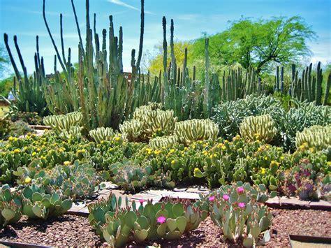 Desert Botanical Garden - 7 interesting road trip stops in the southwestern us not