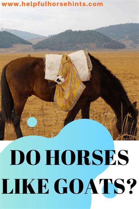 horses goats horse together helpfulhorsehints