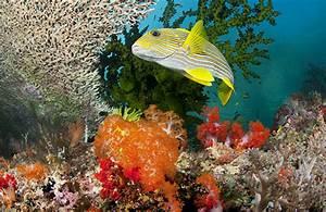 Underwater Photography Coral | www.pixshark.com - Images ...