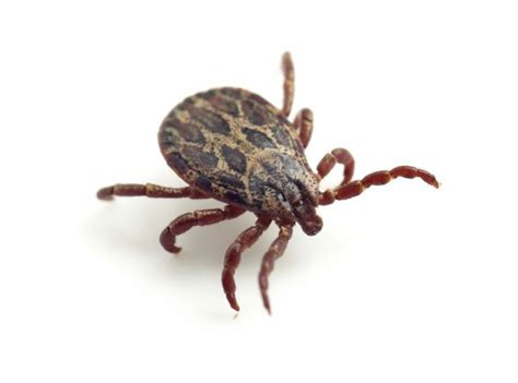 Lyme Disease Shot Could Offer 100% Protection