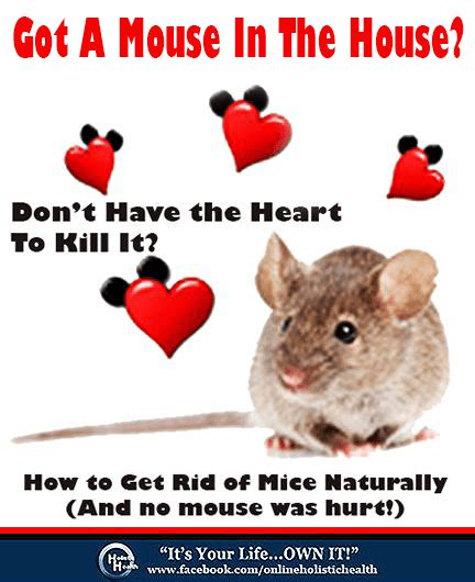 how to get rid of mice in house how to get rid of mice naturally