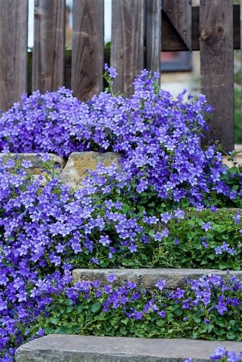 cheap ground cover ideas 25 best ideas about periwinkle ground cover on pinterest myrtle ground cover ground cover