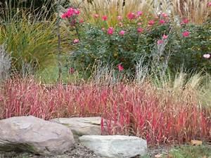 Gräser Für Den Garten : dekorative gr ser im garten wissenswertes und praktische ~ Michelbontemps.com Haus und Dekorationen
