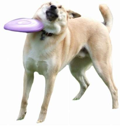 Frisbee Hit Dog Getting Animal Redd Happening