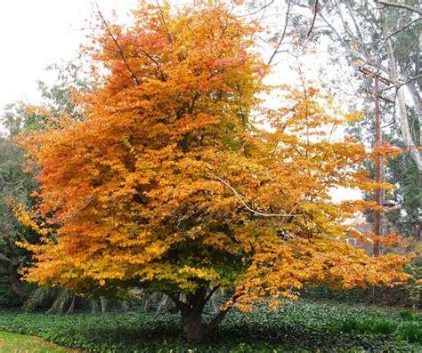 Botanischer Garten Hamburg Indian Summer by 14 Besten Indian Summer Im Heimischen Garten Bilder Auf