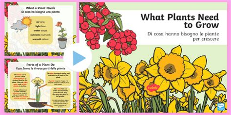 what plants need to grow powerpoint italian plants