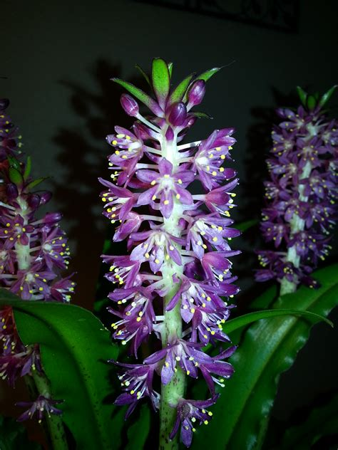 Ask the Flower Expert: Can You Tell Me the Name of This Plant?