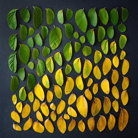 beautiful   natural  edible objects arranged