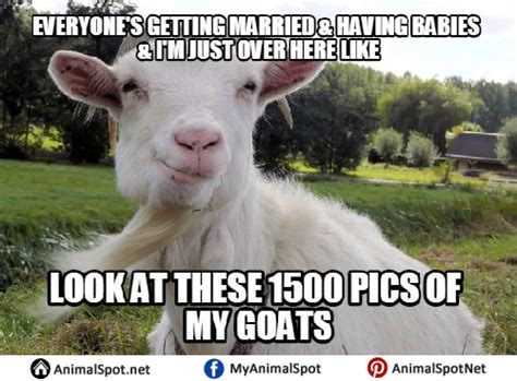 Goat Memes - billy goat meme 100 images billy goat meme 1 blank template imgflip bitch nobody tryna