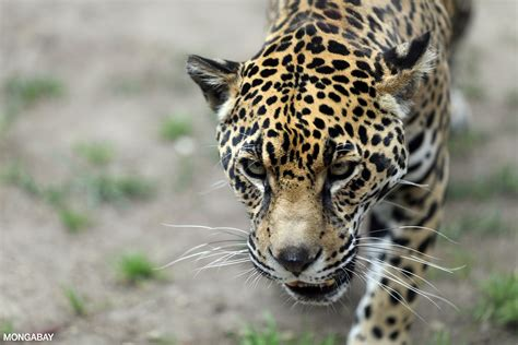 saving  amazon rainforest