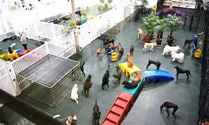 doggie daycare at dogpacer