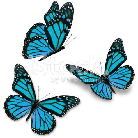 blue butterfly tattoo ideas  pinterest blue