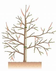 Flechten Entfernen Hausmittel : die besten 25 apfelbaum ideen auf pinterest kirschbaum ~ Lizthompson.info Haus und Dekorationen