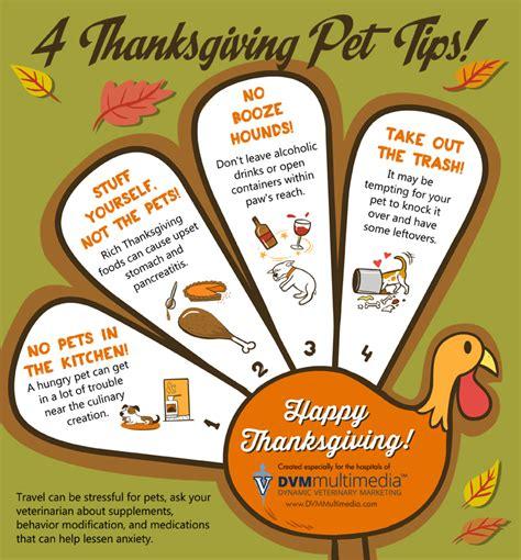 4 thanksgiving pet tips golden woofs