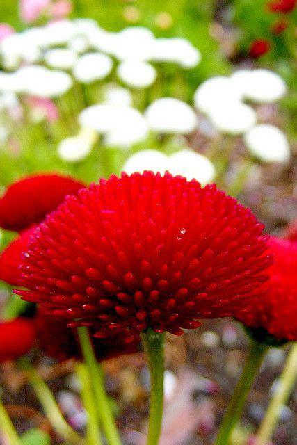garden decoration queenstown best 25 flowers ideas on flower