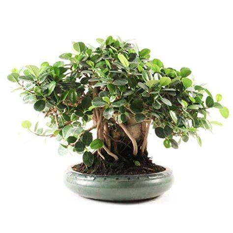 o 249 placer mon bonsa 239 224 l int 233 rieur bonsai ka