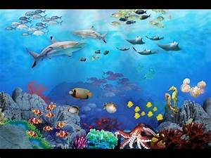 The Beauty of Aquatic Animals - YouTube  Aquatic