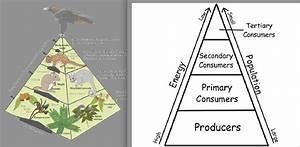 Kis Ecology
