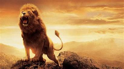 Lion Screensavers Background Backgrounds Wallpapers Resolution