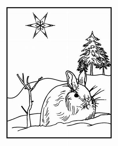 Coloring Winter Rabbit Season Wild Pages