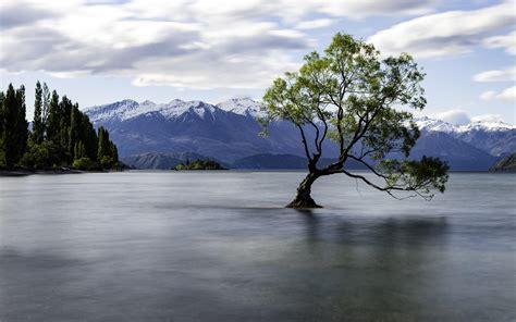 lone tree  lake wanaka  zealand  oc