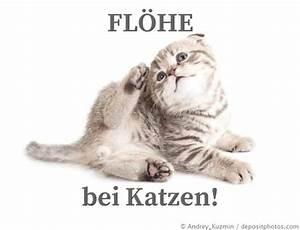 Flöhe Bei Katzen Bekämpfen : fl he bei katzen britisch kurzhaar info ~ Orissabook.com Haus und Dekorationen