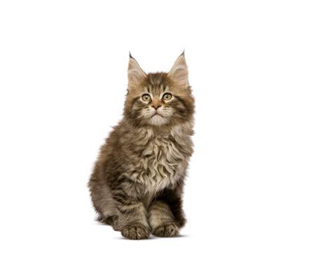 Kitten voeding