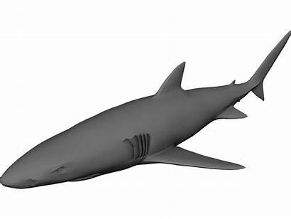 Shark 3d Cad Modeling 3ds Maya Cinema