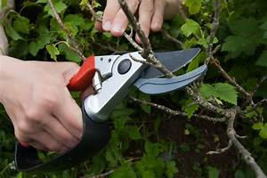 Wann Müssen Apfelbäume Geschnitten Werden : sommerhimbeeren schneiden so wird 39 s gemacht ~ Lizthompson.info Haus und Dekorationen