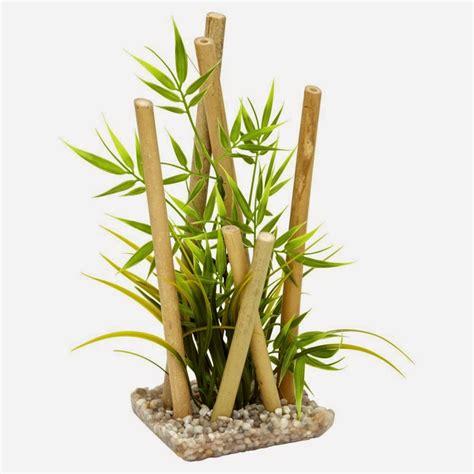 prix bambou en pot 28 images acheter bambou bissetii pas cher au meilleur prix bonsa 239