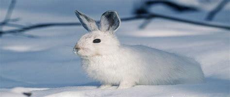 4 สายพันธุ์กระต่าย ที่คนนิยมเลี้ยง