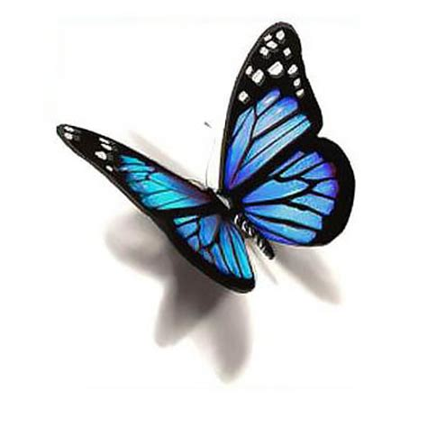 style home designs blue 3d butterfly design