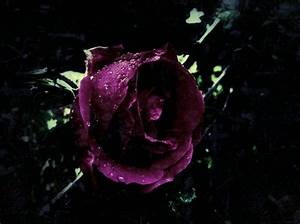 Purple Rose Of Gothic Romance by KimberleyBrooke666 on ...