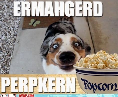 Ermahgerd Animal Memes - 47 best images about ermahgerd on pinterest wiener dogs facial expressions and haha