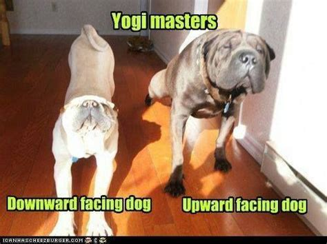 funny yoga images  pinterest yoga meditation