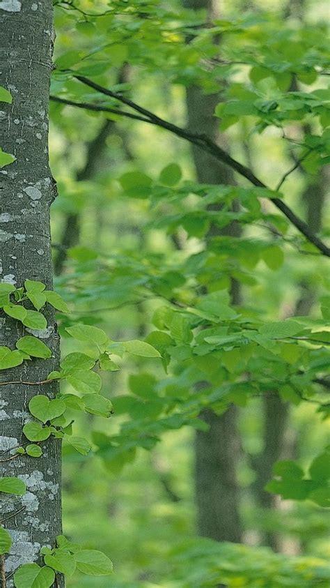 Green Tree Hd Wallpaper by Green Tree Wallpaper 4k Hd Wallpaper Background